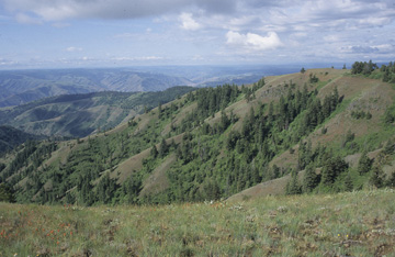 Blue Mountains Ecoregion scene